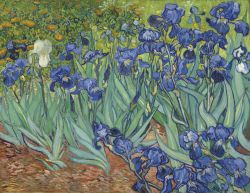Vincent Van Gogh - Irises in the Garden